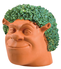 Joseph Enterprises CP 14416 Shrek Chia Pet Case of 16