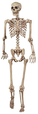 Seasons 18965 5 ft. Pose N Stay Skeleton