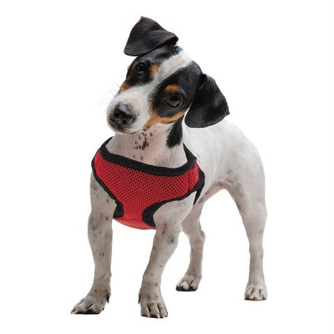 BrybellyHoldings AHRN-001 XS Red Soft & Safe Dog Harness