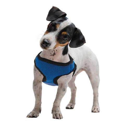 BrybellyHoldings AHRN-103 Medium Blue Soft & Safe Dog Harness