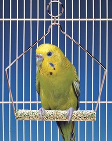Penn Plax BA221 Trimmer Plus Wired Frame Parakeets Swing - 4 in.
