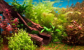 Fresh Water Plants 3d Depth Aquarium Background