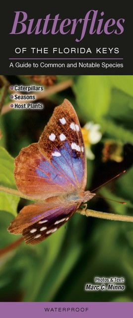 Quick Reference Publishing QRP113 Butterflies of Florida Key