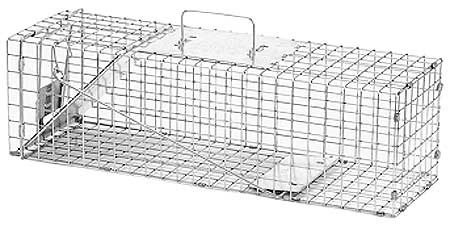Insect & Rodent Traps