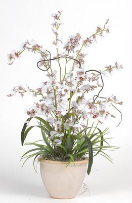 Nearly Natural 1005-WH Dancing Lady Silk Orchid Arrangement