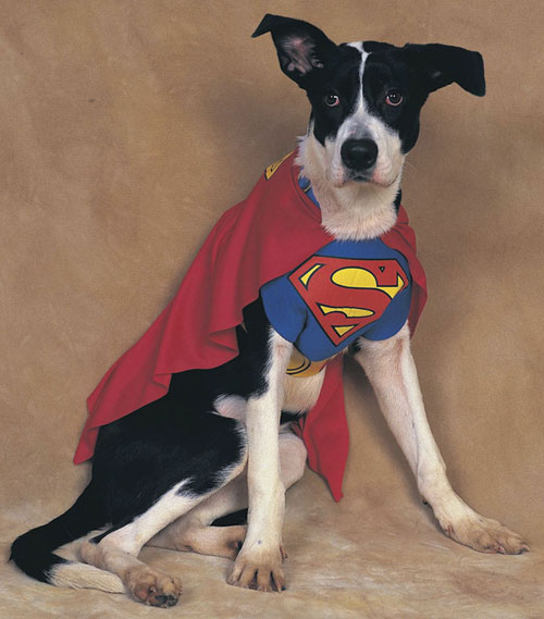 Costumes For All Occasions AF194LG Superman Pet Costume Large
