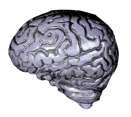 Costumes For All Occasions DU1022 Brain-Human Grey