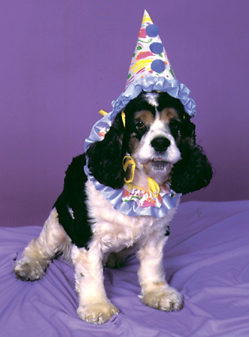 Costumes For All Occasions FW9000CL Pet Costume Clown