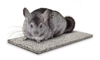 Pets International Chinchilla Chiller - 100079176