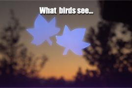 Window Alert WINDA1 Maple Leaf Decal and Deterrent for Birds