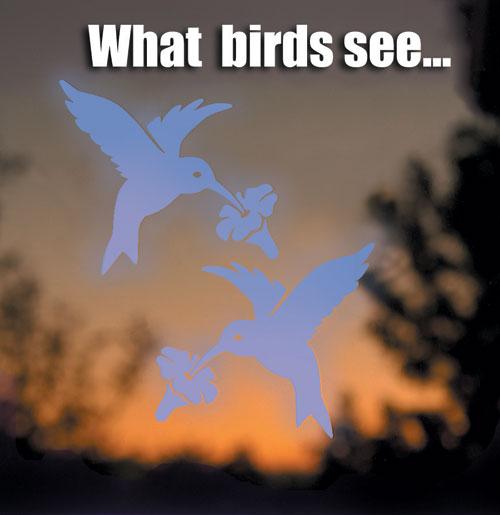 Window Alert WINDA5 Alert Bird Safety Window Decals - Hummingbird