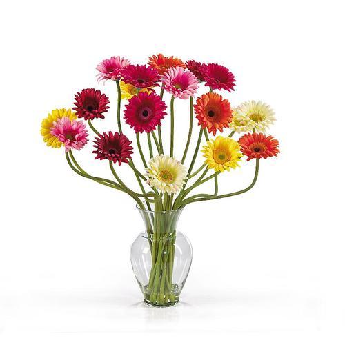 Pot & Vase Plants