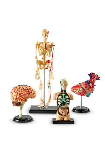 Learning Resources LER3338 Model Anatomy Bundle Set Of 132