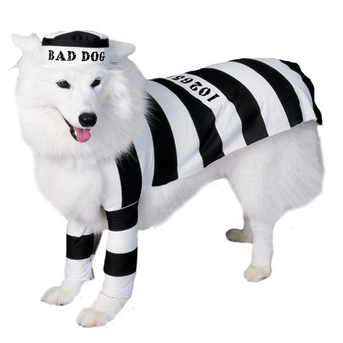 Rubies Costume Co 6897 Prisoner Dog Pet Costume Size Medium