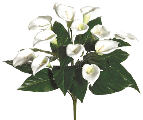 Calla Lily Bush x14 - White - Qty of 6