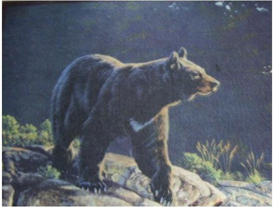 Custom Printed Rugs BEAR Bear Wildlife Rug
